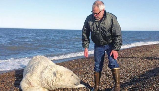Η υπερθέρμανση του Αρκτικού Κύκλου οδηγεί στο λιώσιμο των πάγων και εκατοντάδες πολικές αρκούδες σε μετανάστευση προς αναζήτηση τροφής. Το «hot spot» στο Κακτόβι όπου οι «μετανάστες» φτάνουν κατά κύματα!