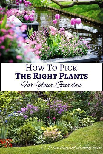 How To Pick The Right Plants For Your Garden If you are looking