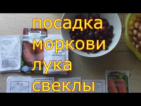 посадка моркови лука свеклы удобной сажалкой - YouTube