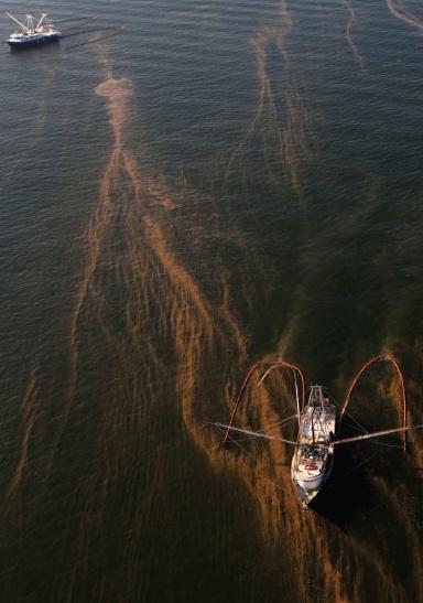 Deepwater horizon haliburton dick cheney