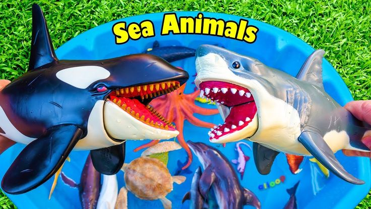Learn Colors With Wild Sea Animals Blue Water Shark Toys For Kids Video  Watch i…