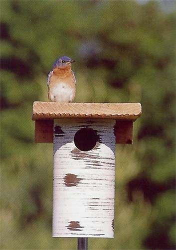 pvc-birdhouse