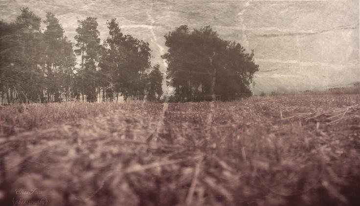 spirits wandering around the trees