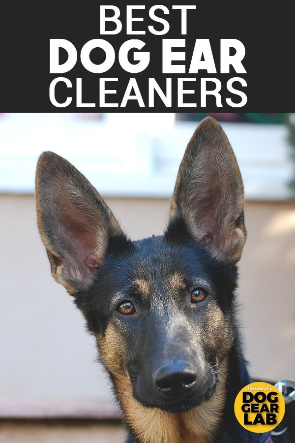 Best Dog Ear Cleaners Dog Ear Cleaner Cleaning Dogs Ears Dog