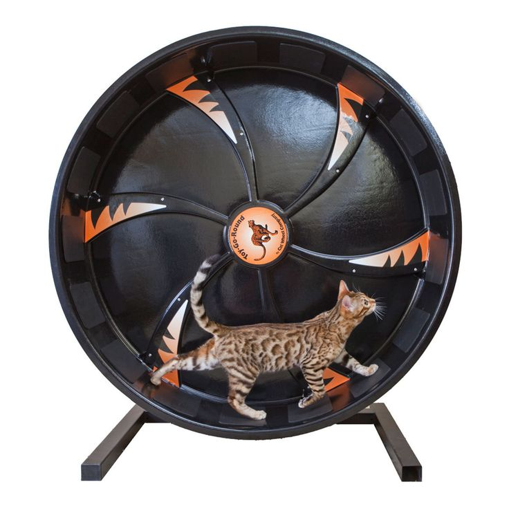 Cat Exercise Wheel from Cat Wheel Company