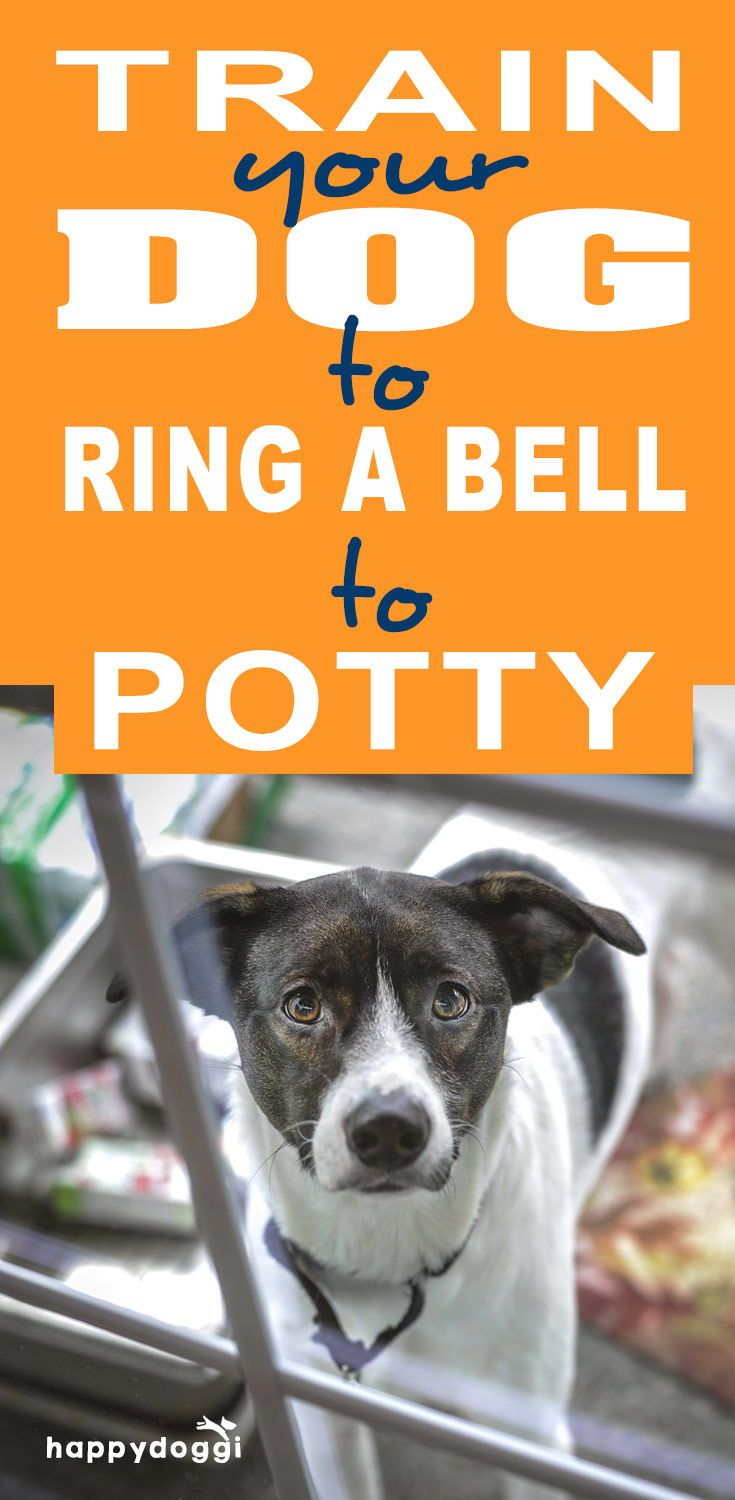 How To Train Your Dog To Ring A Bell To Potty Training Your Dog Dog Training Dog Potty Training