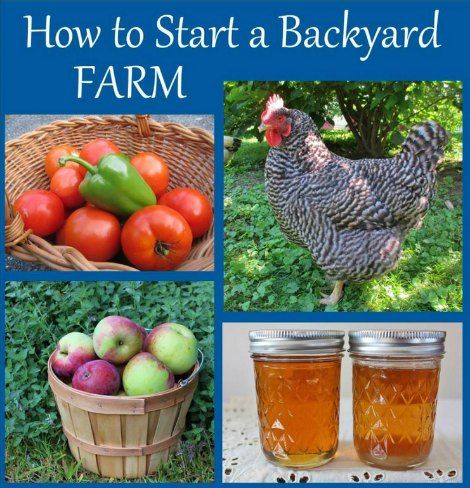 How To Start A Backyard Farm | Ready to turn your backyard into a small farm? A Creating a backyard farm is a great way to become more self-sufficient.