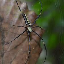 Afbeeldingsresultaat voor enge spinnen