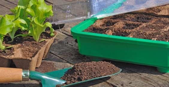 Piante perenni da coltivare nell'orto. Se avete deciso di programmare la coltivazione dell'orto per la primavera, non dimenticate che potrete dedicare alcuni spazi alla coltivazione di piante perenni, che potrete seminare o trapiantare una sola volta per poterle avere a disposizione per molti anni. Sono piante perenni alcune aromatiche, come la salvia, il rosmarino e la menta, ma anche alcuni ortaggi, come gli asparagi, i topinambur e i carciofi. Ecco alcuni consigli utili per scegliere…