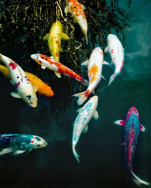 Koi pond via sparkles of life shangri pinterest for Artificial koi fish