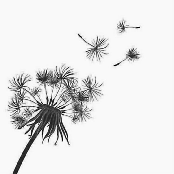 Dandelion Tattoos Designs Ideas And Meaning: Pin Von Brigitte Nauer Auf Handstickmuster