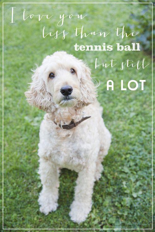 """I love you less than the tennis ball but still a lot"""