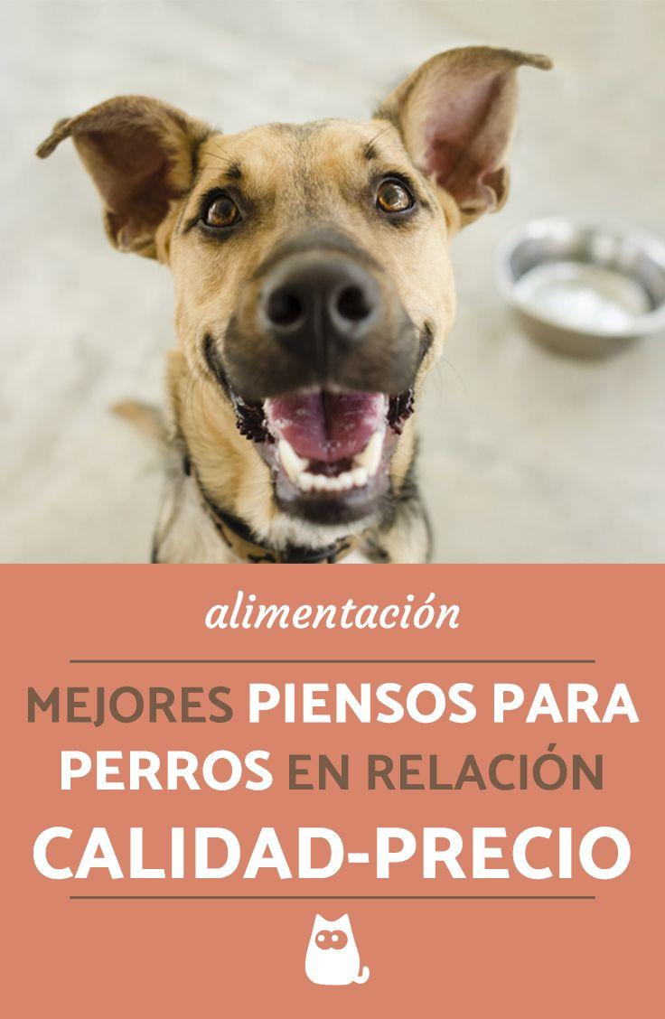 Mejores Piensos Para Perros En Relacion Calidad Precio Mejores
