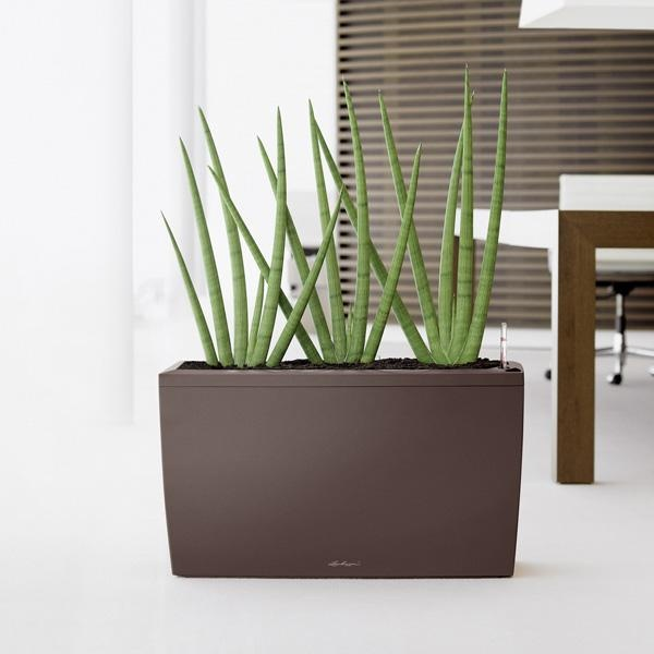 les 25 meilleures id es de la cat gorie sansevieria cylindrica sur pinterest fleurs. Black Bedroom Furniture Sets. Home Design Ideas
