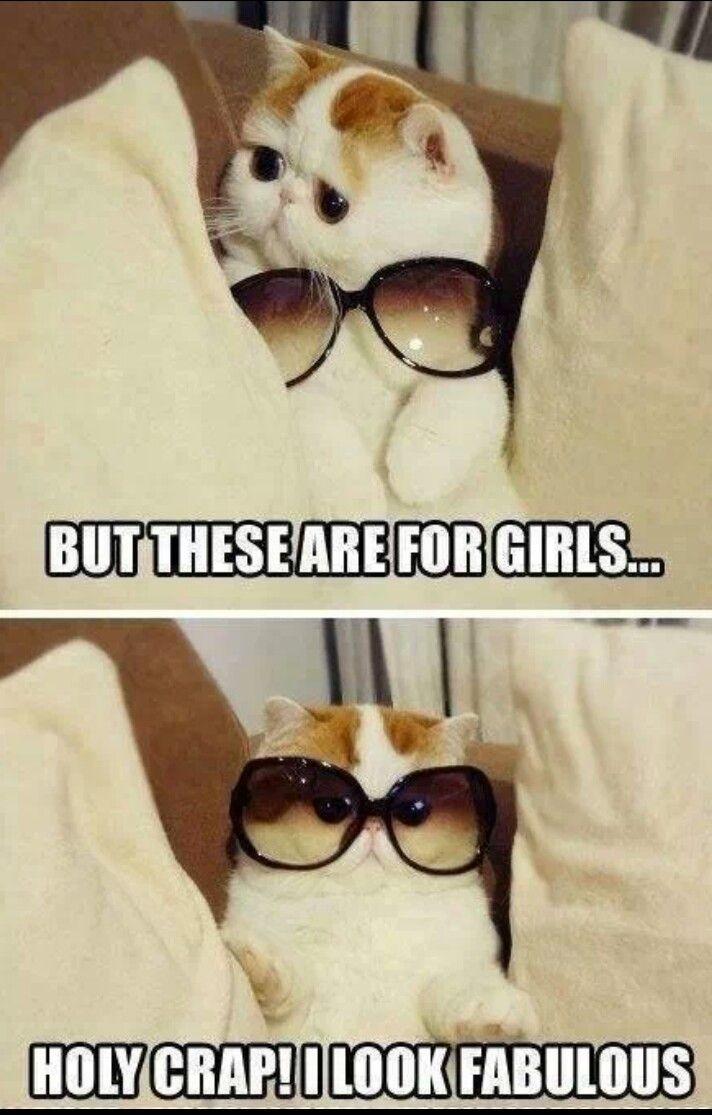 Love cute cats! #Cute #Cat #LOL #Funny #Pics xx