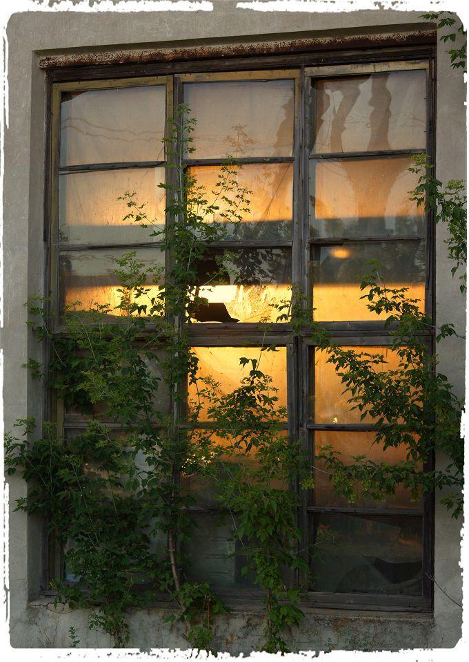 Sunlight through the broken windows. #poetry #freeimages #freepictures #freephotos #haiku #sunlight #sun #brokenwindows #windows #russia #village #rural #ruralrussia #evening