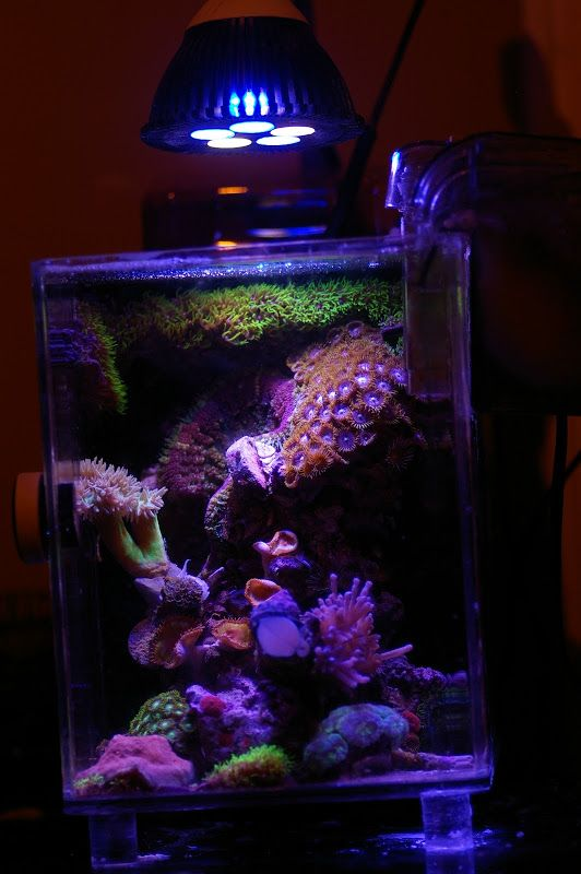 17 images about reef tank inspiration on pinterest for Two gallon fish tank