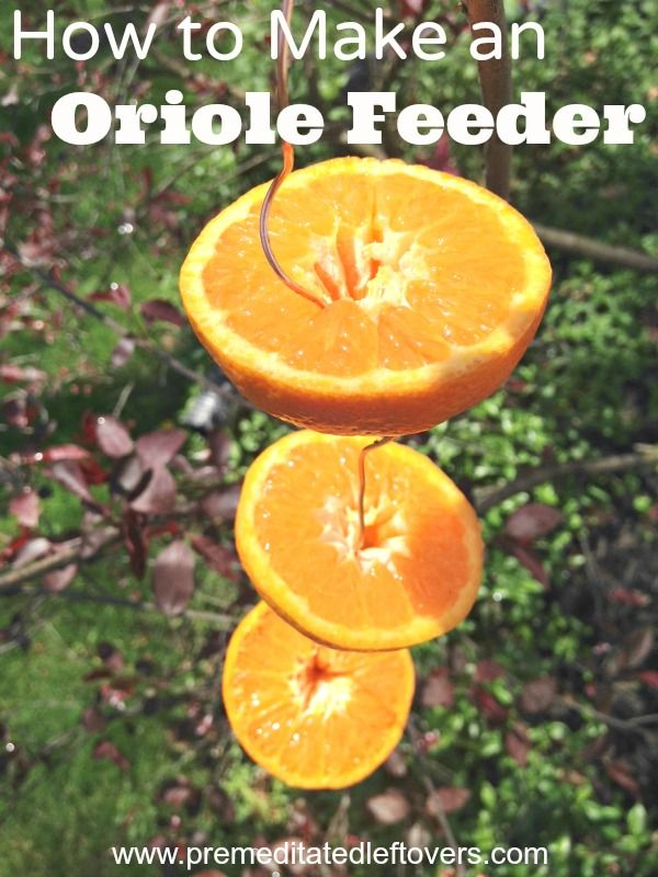 Learn How to Make an Oriole Bird Feeder using wire and oranges to hang in your yard. This DIY bird feeder design idea is an easy and frugal way to attract beautiful orioles to your home and garden .