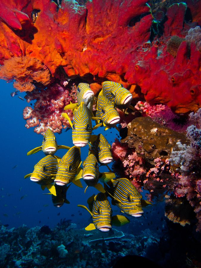 The coral reefs around Komodo island are  some of the best in the world. #komodo #indonesia #diving
