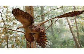 Image result for dinozauri specii