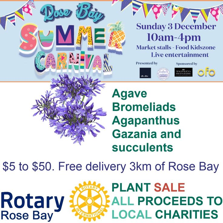 Plant sale Rose Bay Summer Carnival. Grown locally. All proceeds to local #charities by Rose Bay #RotaryClub #Sydney  Sunday 3rd December #agave #bromeliad #agapanthus #gazenia #succulents From $5 to $50. Free delivery 3km of #RoseBay Bulk deals possible