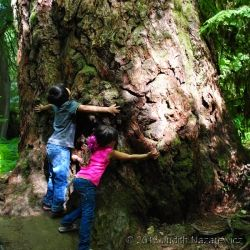 It was a short 45 minute drive that brought us to the magnificence Giant Trees in Cathedral Grove Forest on Vancouver Island. A day trip that...