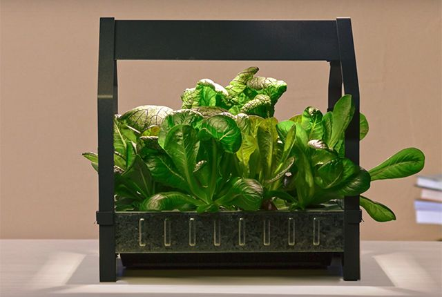 IKEA Is Going to Sell Hydroponics Starter Kits... The indoor gardening equipment is designed to be affordable on a small scale, so you don't need to launch a produce business just to make growing a few vegetables worthwhile. ... #Aquaponics #Hydroponics