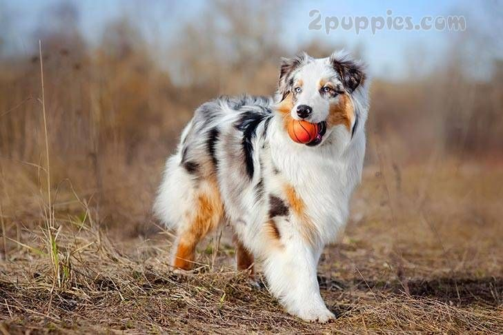 Dog Breeds With Green Eyes With Images Low Maintenance Dog Breeds Dog Breeds Active Dogs Breeds
