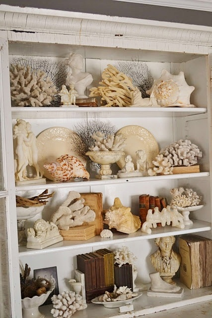 Seashell Collection Display. Because one can never have enough seashells, ya know. ;)