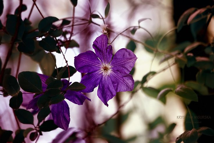 In tangle of leaves by Krystyna Wigurska on 500px