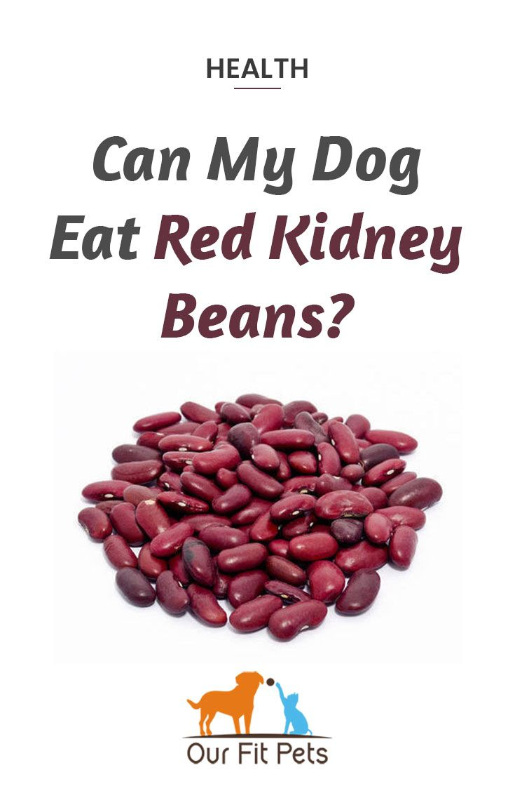 Can My Dog Eat Red Kidney Beans Our Fit Pets Red Kidney Bean Chili Dishes Beans