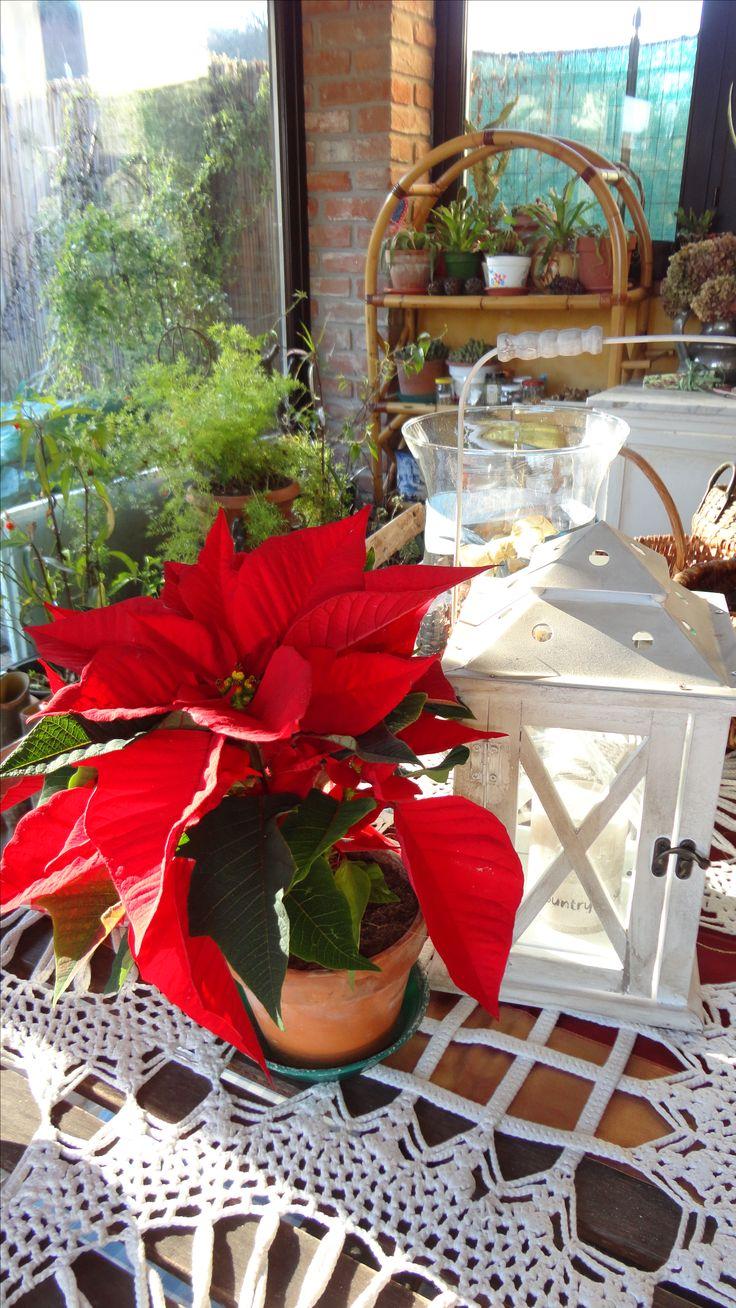 Veranda natalizia