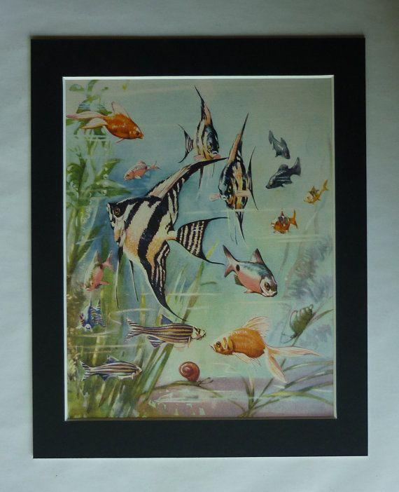 1950s Vintage Aquarium Print Tropical Fish Gift by PrimrosePrints