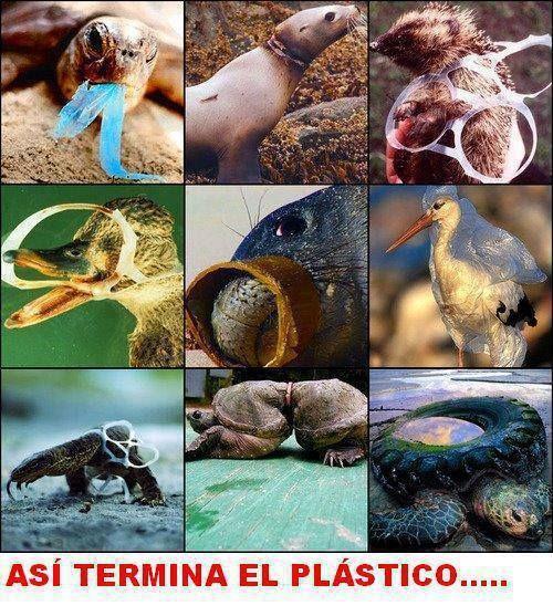 Con nuestra irresponponsabilidad les causamos muchísimo mal a los animales