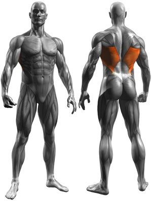 15 best latissimus dorsi exercises images on pinterest exercises lats exercises free workout log fandeluxe Image collections