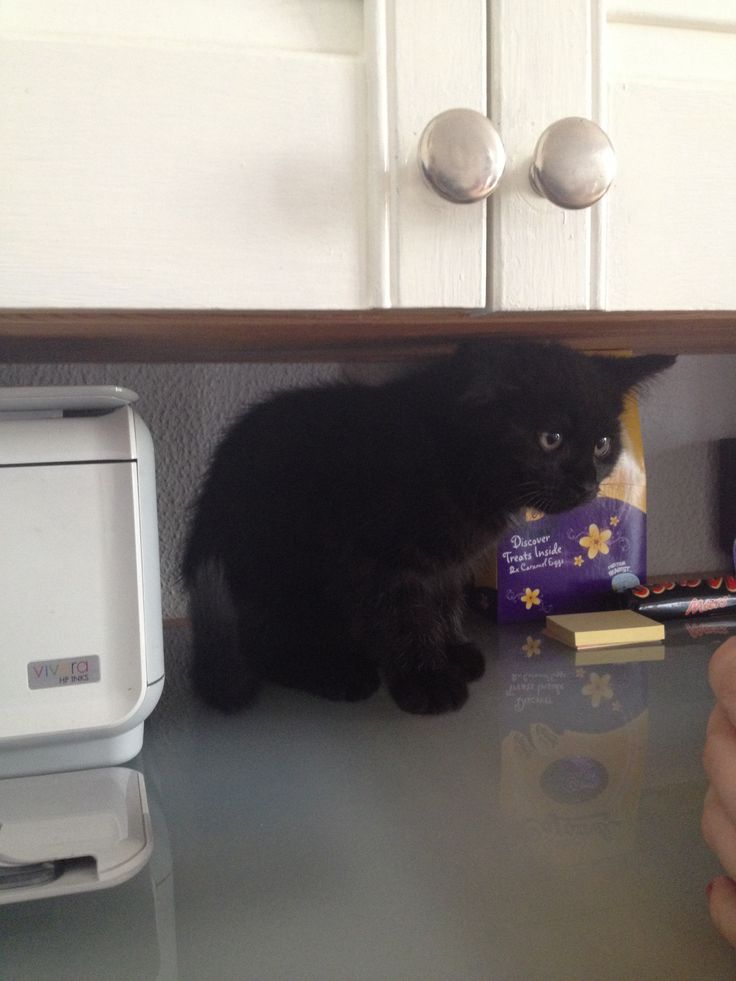 25th May 2014: marmite is hiding from the hoover