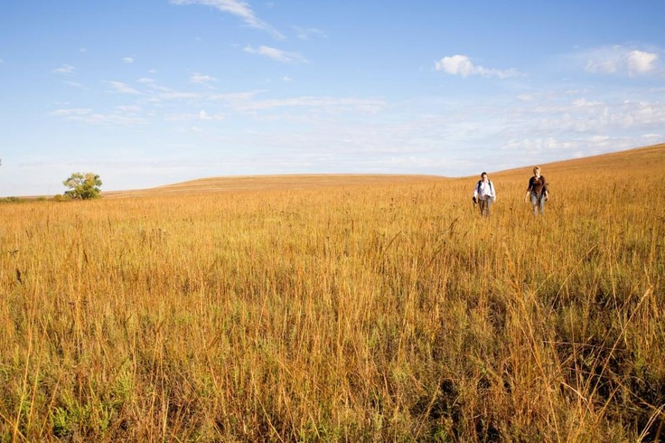 Kansas' Flint Hills Scenic Byway | Midwest Living: Flint Hill, Hill National, Favorite Places, Hill Regions, Kansas Pride, Hill Scenic, Scenic Byway, Vacations Places, Grassland Covers
