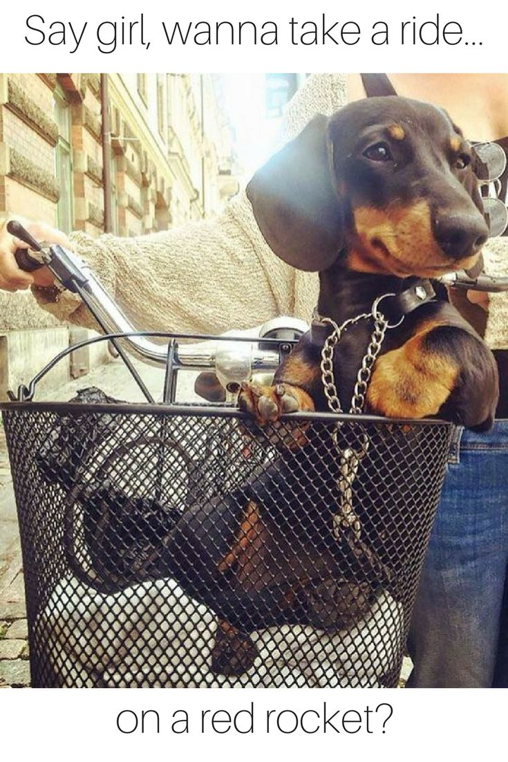 Oh those PG-13 wiener dog jokes never end.