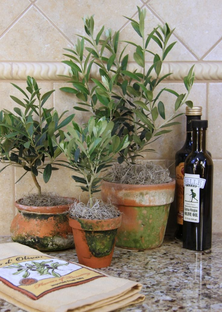 Les 25 meilleures id es concernant olivier en pot sur pinterest pots billes cour rustique - Olivier en pot ...