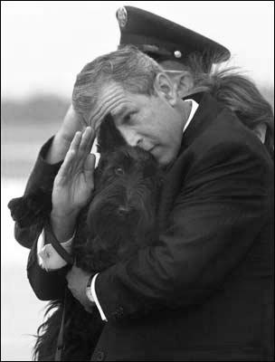 .: President George, Dogs, U.S. Presidents, Barney, President Bush, Health, White House, Scottish Terriers