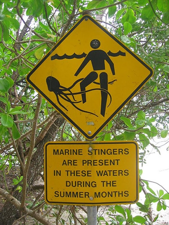 A sign in Australia warning people about the jellyfish that can and often does, kill people there-very very toxic