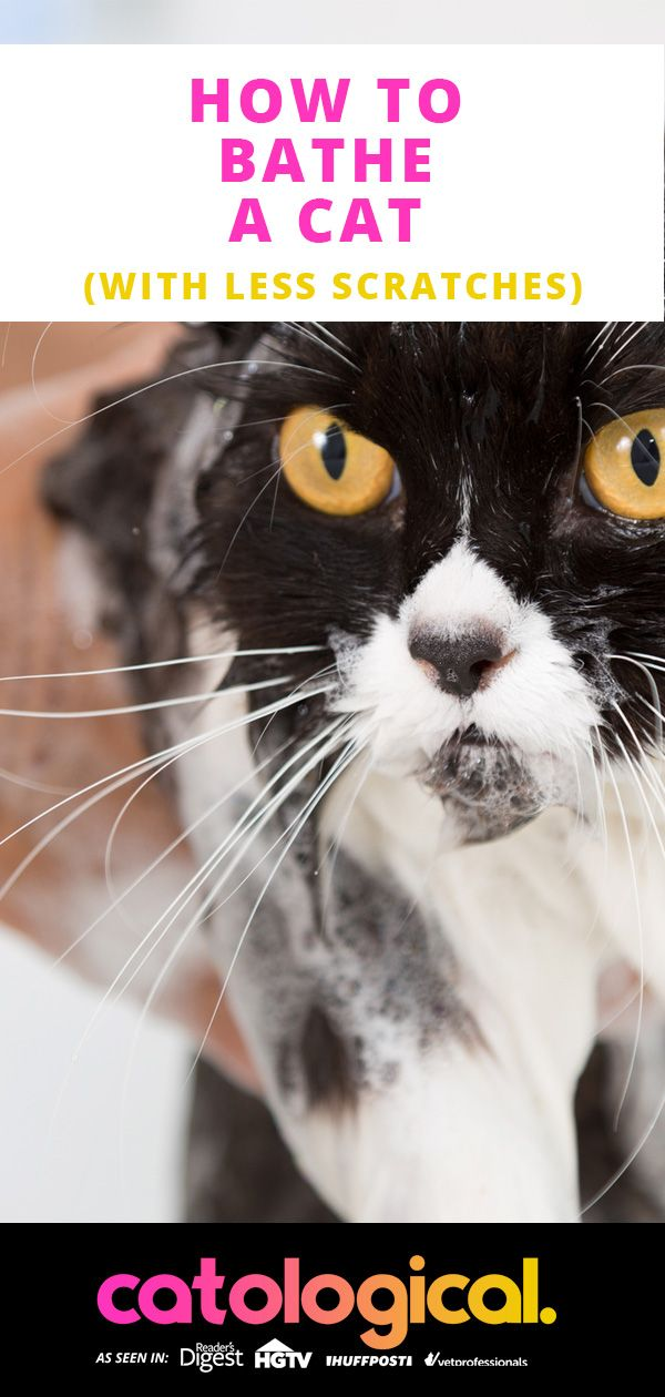 How To Bathe Your Cat Safely And With The Best Shampoo Cat Has Fleas Cat Fleas Cat Care