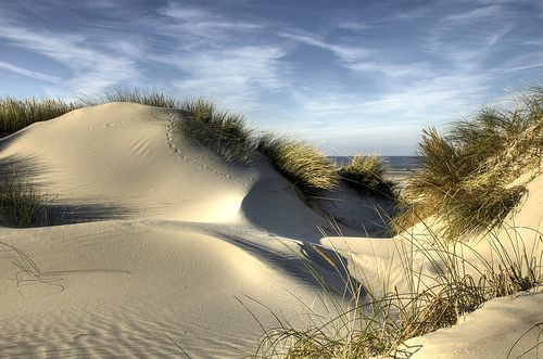 Hollandse duinen:
