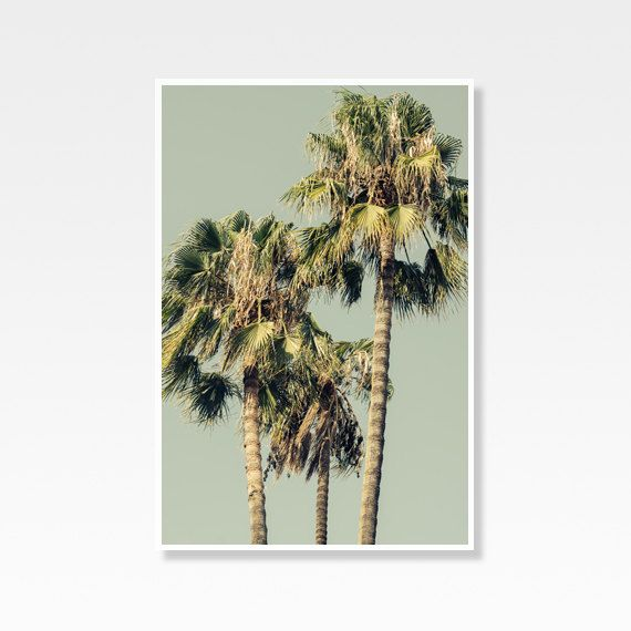 Palm Tree Photo Palm Tree Photograph by PatiHomeDecor