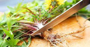 Kemoterapiden 100 kat daha etkili inanılmaz bitki