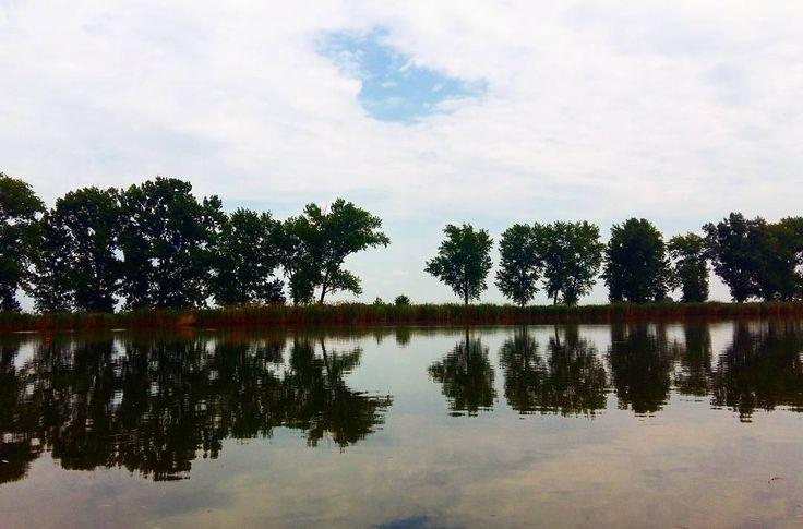 Szajolba, a kert végében a Holt-Tisza ⛅ #nature #naturelove #lake #szajol #trees #beautiful #landscape #watersurface #sky #summertime #outdoor #home