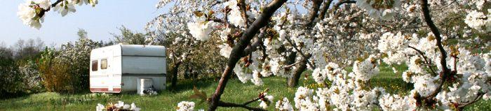 Aire naturelle de camping les cerisiers à Maclas, Loire, aux portes de l'Ardeche et au coeur du parc naturel régional du Pilat - www.camping-maclas.fr