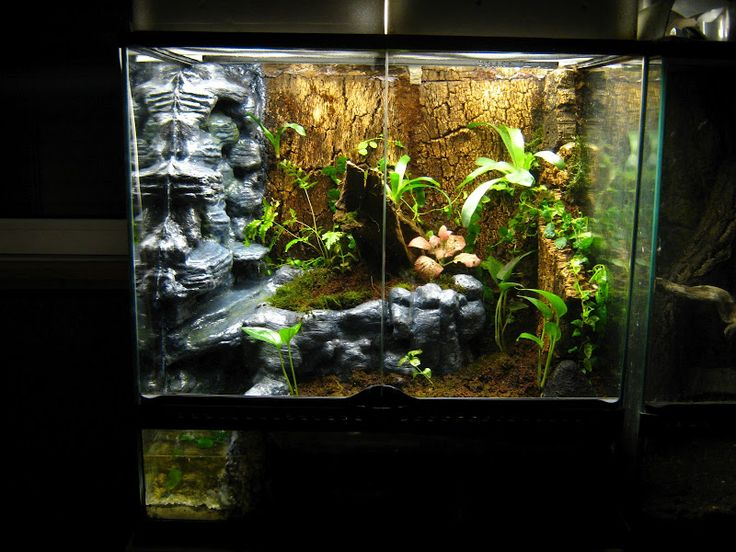 17 best images about exo terra on pinterest terrarium ideas crested gecko and habitats. Black Bedroom Furniture Sets. Home Design Ideas