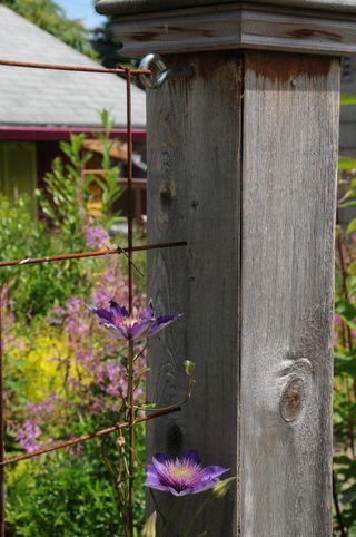 Best 25 Welded Wire Fence Ideas On Pinterest Welded