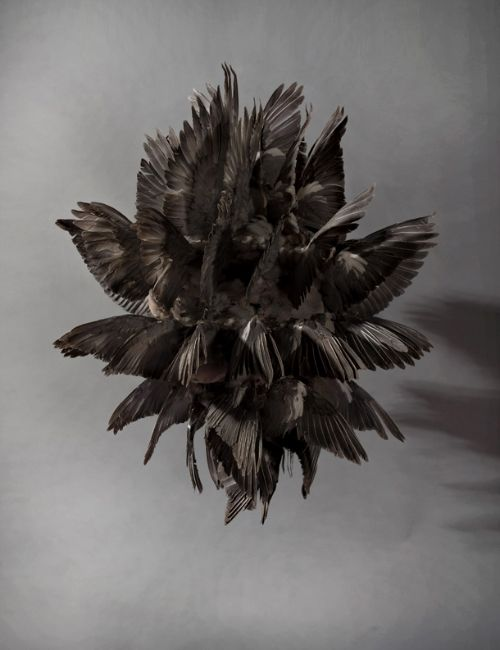 black fever by polly morgan